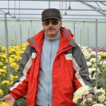 Crizanteme Dobrescu Focsani
